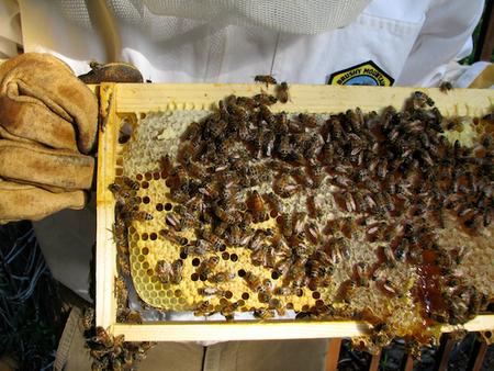 Bees and Honey - Max Wong